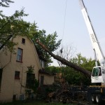 2014-tree-work-308