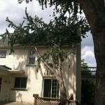 2014 tree work 332