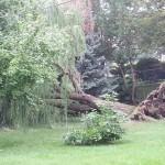 2014-tree-work-355