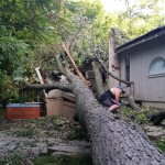 2014-tree-work-463