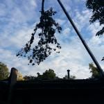 2014-tree-work-484
