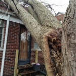2014-tree-work-651