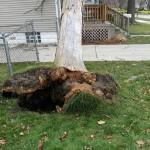 2014-tree-work-661